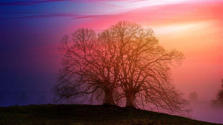 tree sunset dawn 5k Mac Wallpaper