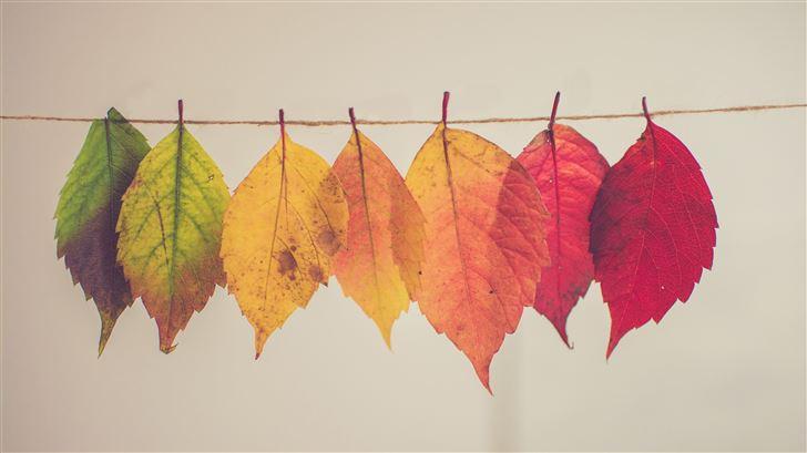 colorful autumn leafs 5k Mac Wallpaper