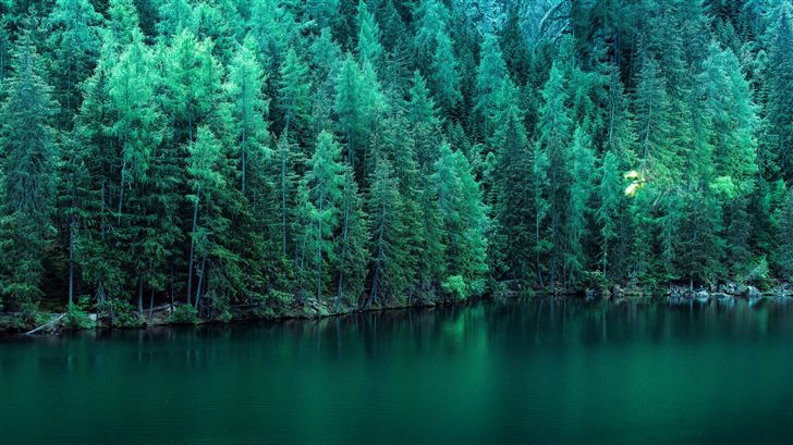 pine trees along lake 5k Mac Wallpaper