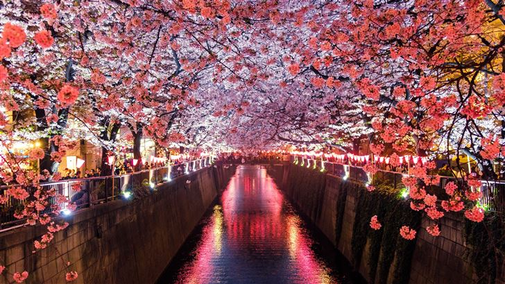 cherry blossom trees covering river canal Mac Wallpaper