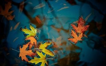 Fallen leaves Mac wallpaper