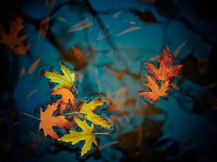 Fallen leaves Mac Wallpaper