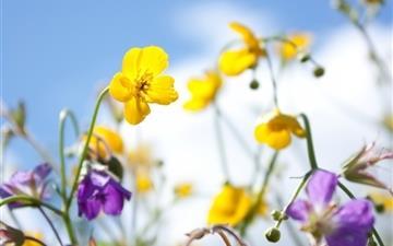 Plants Flowers Spring Sky Yellow Purple Mac wallpaper