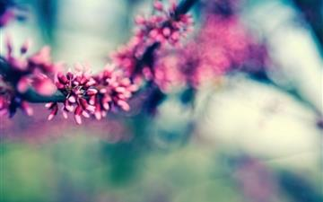 Beautiful Spring Colours Mac wallpaper