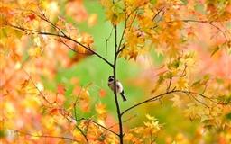 Little Cute Sparrow