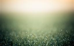 Blurred minimalistic grass