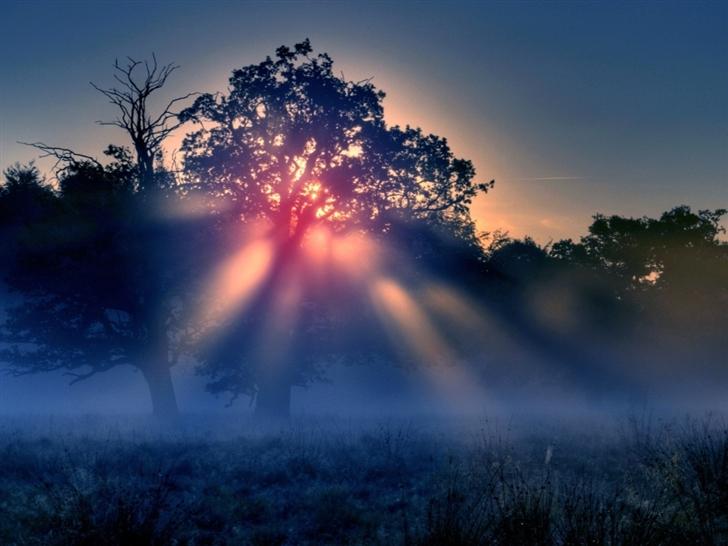 Foggy Sunrise Nature Mac Wallpaper