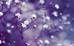 Nature Flowers Macro