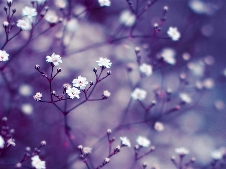 Nature Flowers Macro Mac Wallpaper