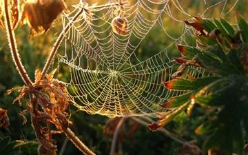 Dew on spider web Mac wallpaper