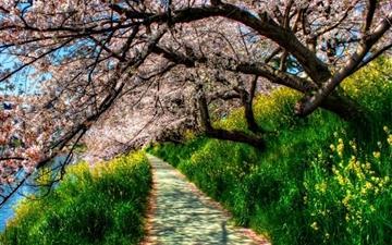 Cherry blossom tunnel Mac wallpaper