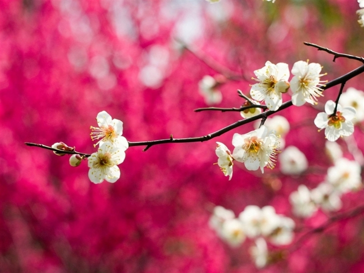 Spring White Blooms Mac Wallpaper