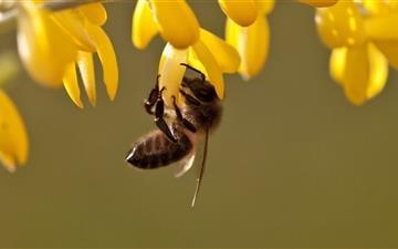 Bee Mac wallpaper