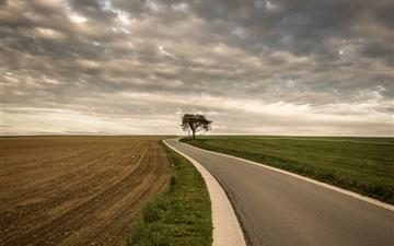 Roadside Tree Nature Mac wallpaper