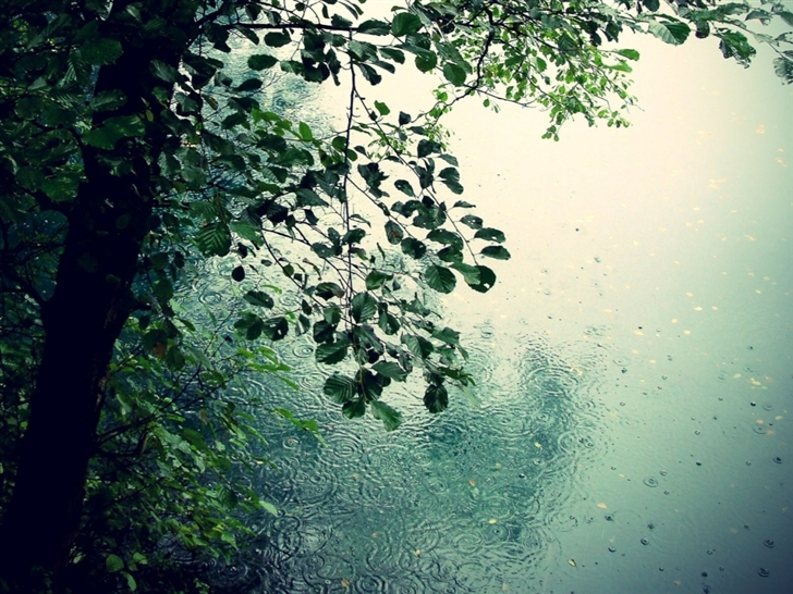 Nature Rain Mac Wallpaper