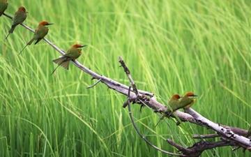 Birds Mac wallpaper