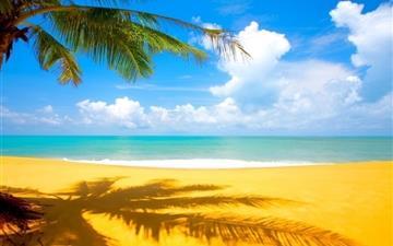 Beach Palm Trees Mac wallpaper
