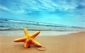 Sea star Mac wallpaper