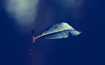 Single Leaf On A Branch Mac wallpaper