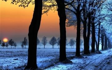 Sunrise Trees Path Mac wallpaper
