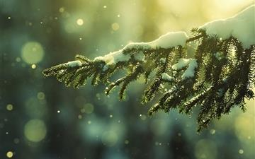Sunlight Snow Branch All Mac wallpaper