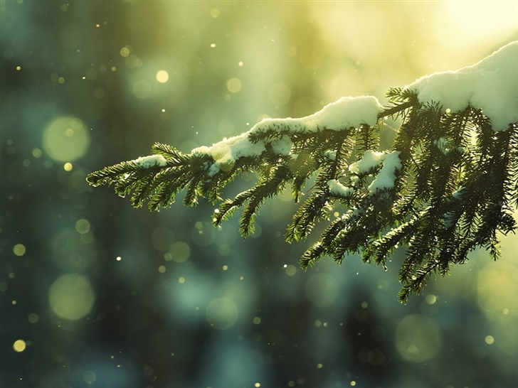 Sunlight Snow Branch Mac Wallpaper