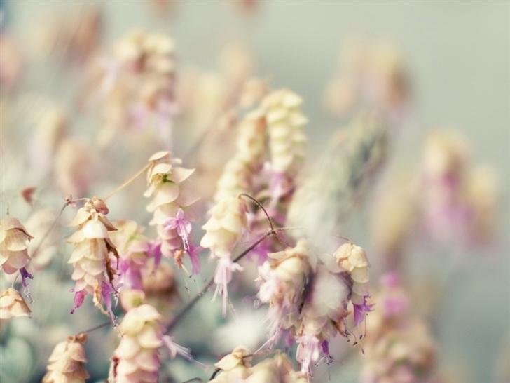 Flowers Bouquet Purple Mac Wallpaper