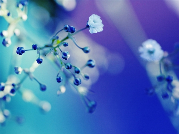 Flowers Cyan Blue Fuzzy Mac Wallpaper