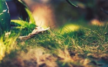 Grassland and leaf Mac wallpaper