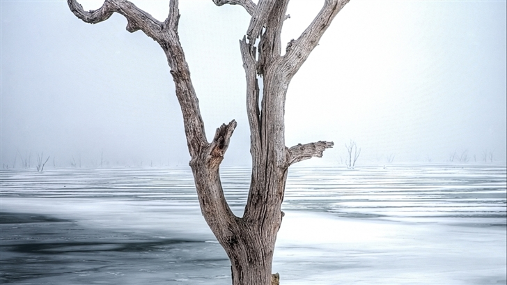Dried and dead trees Mac Wallpaper