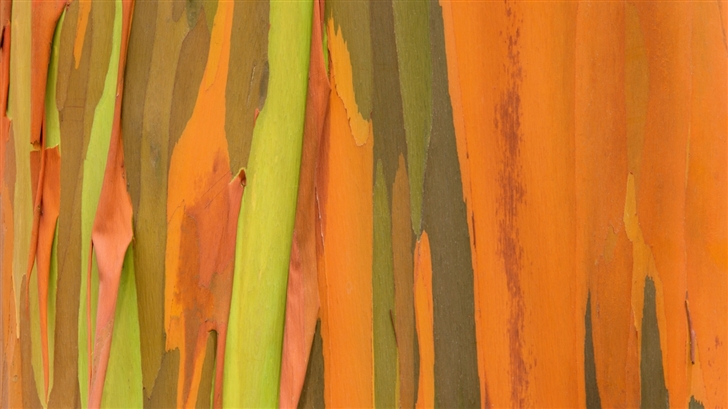 Orange texture Mac Wallpaper
