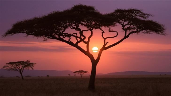 Sunset and tree Mac Wallpaper