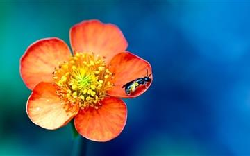 Flower and bee All Mac wallpaper