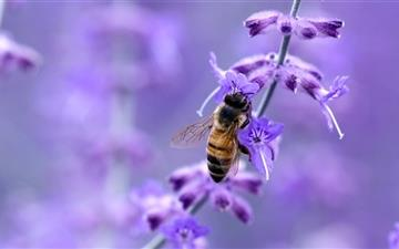 Purple flower and bee All Mac wallpaper