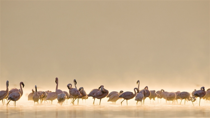 Flamingos Mac Wallpaper