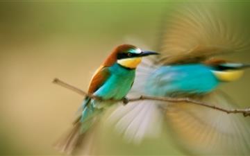Southern Hummingbird Mac wallpaper