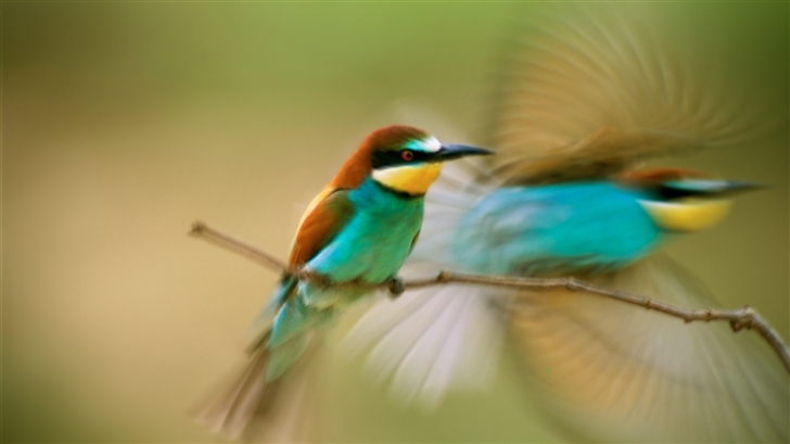 Southern Hummingbird Mac Wallpaper