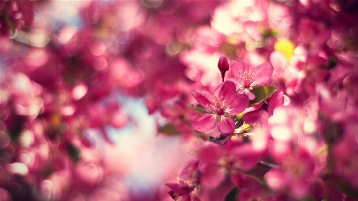 Flowering Peach Mac Wallpaper