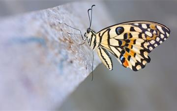 The butterfly Mac wallpaper
