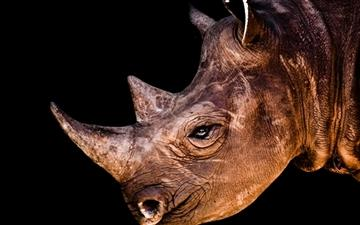 Black Rhinoceros  Mac wallpaper