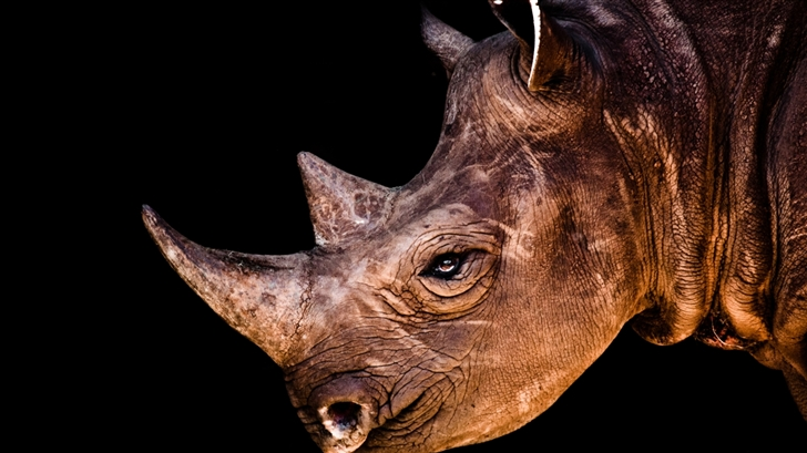 Black Rhinoceros  Mac Wallpaper