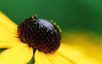 Bee flower Mac wallpaper