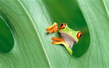 The Frog Prince MacBook Air wallpaper