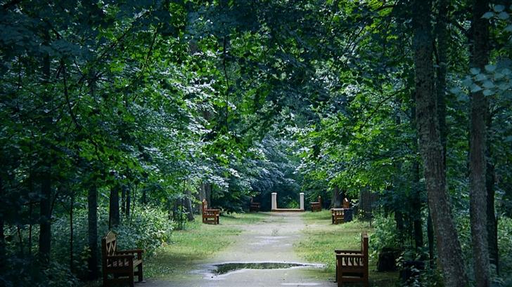 Quiet forest Mac Wallpaper