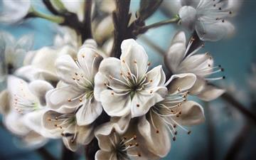 The  flower Mac wallpaper