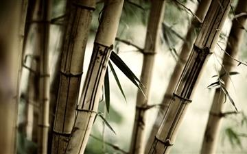 The bamboo MacBook Air wallpaper