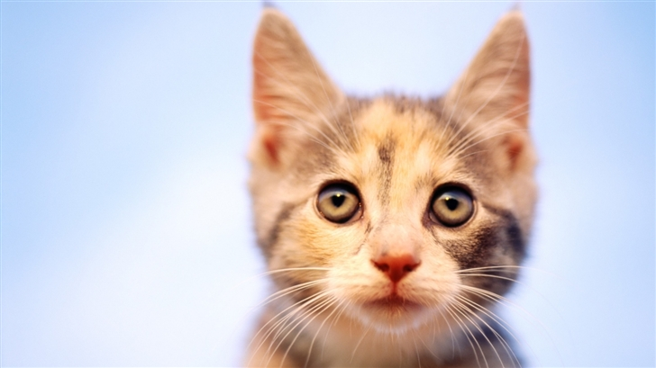 Little Cat Mac Wallpaper