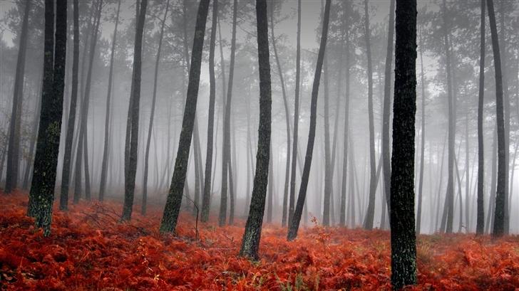 Beautiful forest Mac Wallpaper
