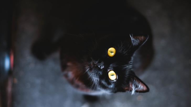 A cat Mac Wallpaper