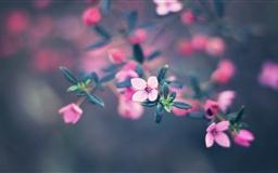 Four Petals Flower